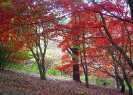 activities for kids at Winkworth Arboretum